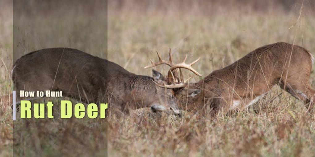 Hunt the Rut for Deer