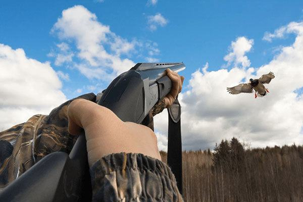 Sea Duck Hunting Tips and Guides for Beginners