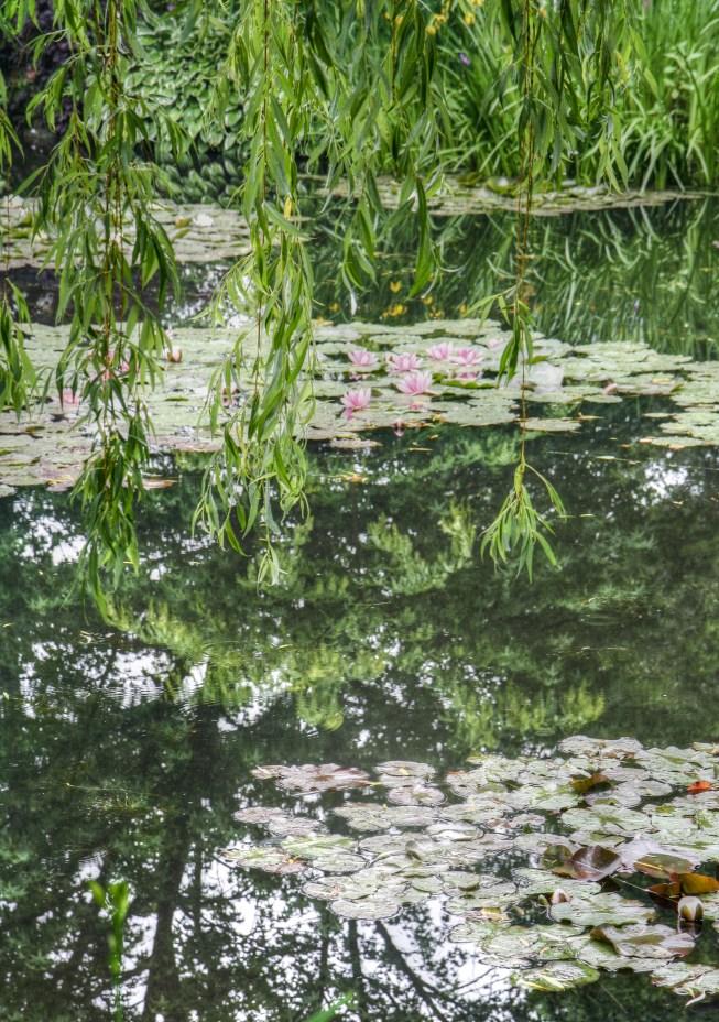 Monets Garden 5