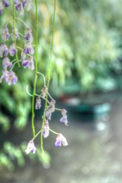 Monets Garden 29_tonemapped