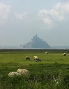 sheep-mont-st-michel