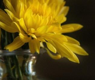 study-of-a-yellow-flower-linen