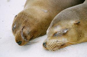2 seals lying on ice