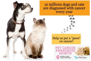 National Pet Cancer Awareness Month