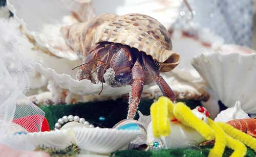 Martin Z. Mollusk sees shadow, ushering in early summer in Ocean ...