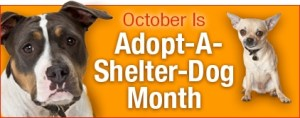 Adopt A Dog Month - October is adopt a dog month!!!!!!!!!!!?