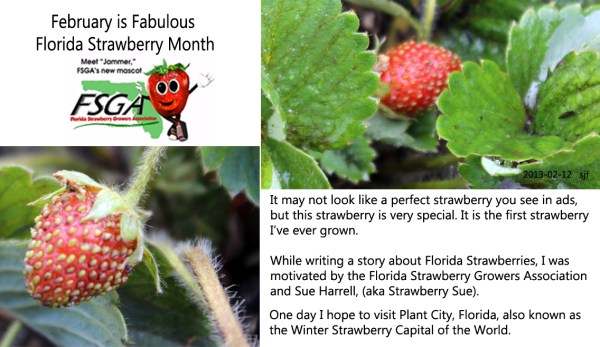 Dietitians Online Blog: February is Fabulous Florida Strawberry Month