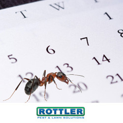 how much does ant termination cost for an apartment?