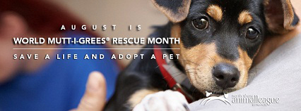 Join World Mutt-i-grees® Rescue Month and Celebrate Shelter Pets ...