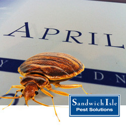 Blog - It's Bed Bug Awareness Week!