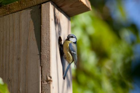 House the birds - it's National Nest Box week