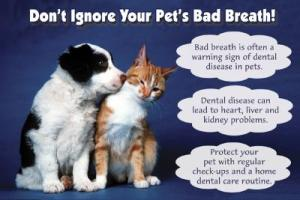 Pet Dental Health Month - Any dog dental health experts?