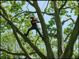 International Tree Climbing Days - Traveling To and Around The US Climbing?