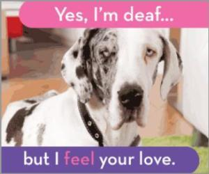 Deaf Dog Awareness Week - Hates living at my in-laws?