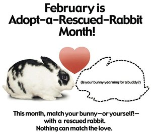Adopt A Rescued Rabbit Month - FEBMONTH.jpg