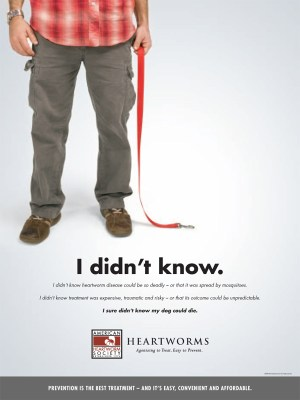 National Heartworm Awareness Month - Heartworm Awareness Month