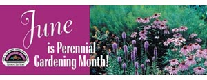 June is Perennial Gardening Month - Where can I find a good guide to what flowers are in bloom each month?