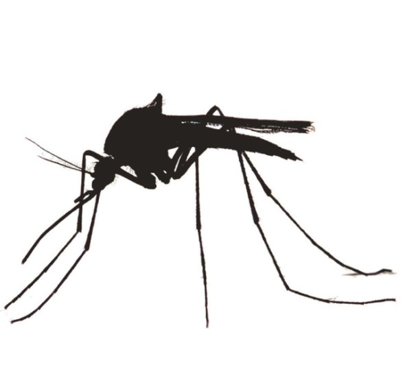 County Executive declares Mosquito Control Awareness Week - News ...