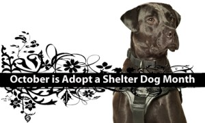Adopt A Shelter Dog Month - proces of adopting a dog from shelter?
