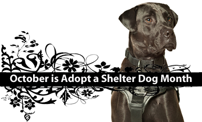proces of adopting a dog from shelter?