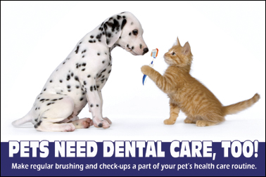 Do your pets get regular dental exams/cleaning - repost into cat section?