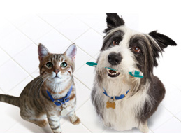 Any Canadians experienced with pet insurance? Which is good?