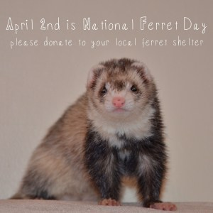 National Ferret Day - Who else has a birthday on April 2nd 1968?
