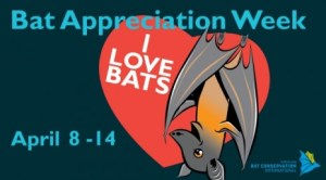 Bat Appreciation Week - Why is the economy crashing?