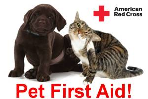 Pet First Aid Awareness Month - What Should I Look For In A German Shepherd Puppy?