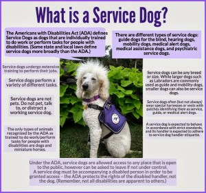 National Service Dog Month - Harrassed by neighbor over my approved service dog, need legal advice?