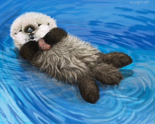 Sea Otter Awareness Week, Newborn Otter Pup by Psithyrus on deviantART