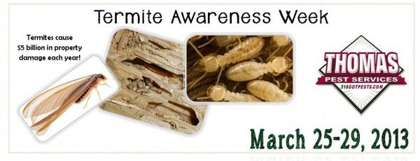 Blog - Signs of Termites