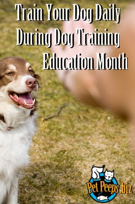 Dog Training Education Month - my dogs behavior help?!!!?