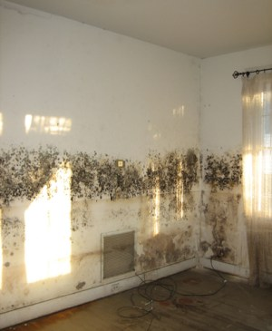 Mold Awareness Month - In search of this recipe for a long while can you help?