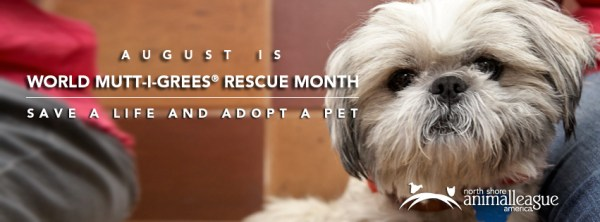 August is World Mutt-i-grees® Rescue Month - North Shore Animal ...