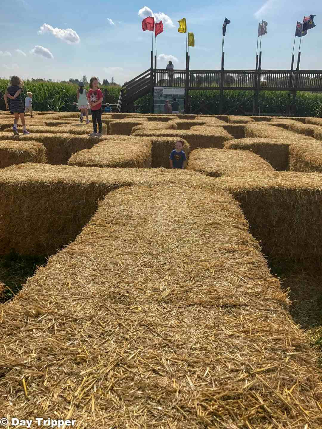 Straw Barrel Maze at Severs Corn Maze