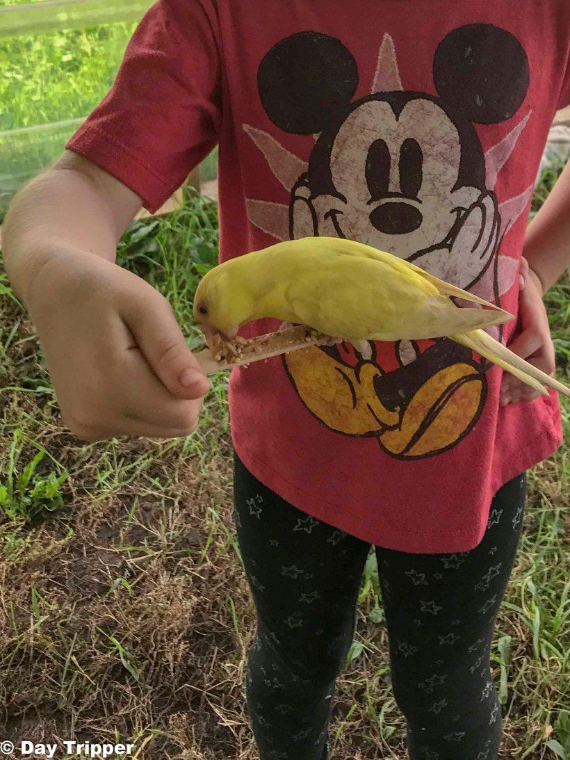 Bird Encounter at Severs Corn Maze