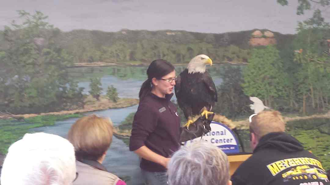 Eagle Show at the National Eagle Center in Wabasha