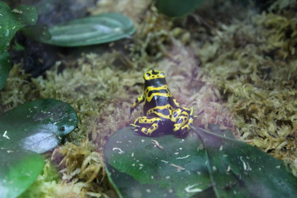 Tropical Frog at Sea Life Aquarium