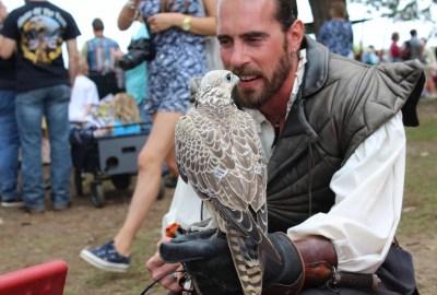 Hawk at the Minnesota Renaissance Festival