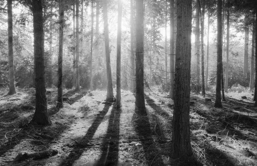 Tree Shadows Winter Solstice