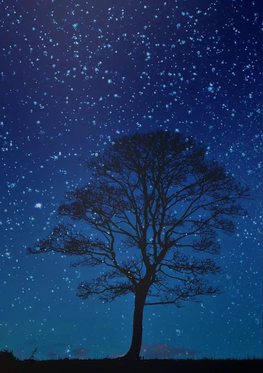 StarGazing Winter Solstice
