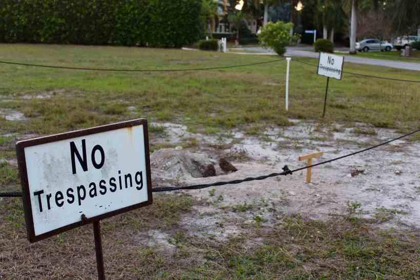 Protected Burrowing Owl on Marco Island Florida