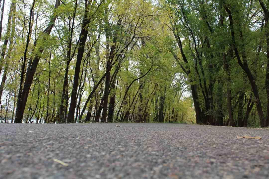The great Minnesota road trip