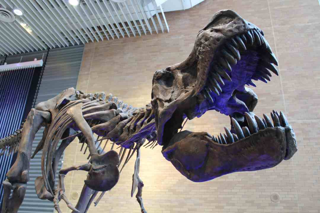 The Science Museum of MN