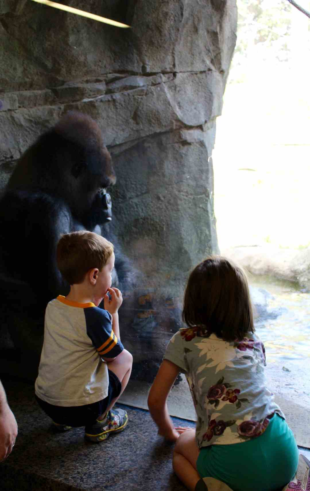 Gorilla's at the Como Zoo