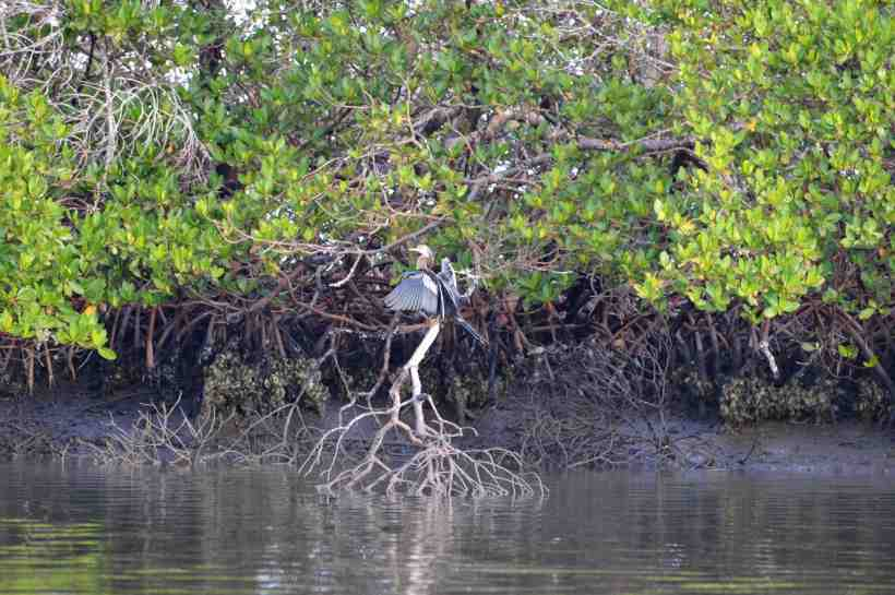 Birds on Marco Island