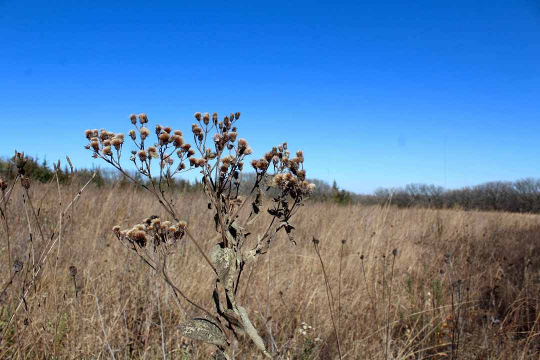 Prairie and Hiking at Good Earth State Park