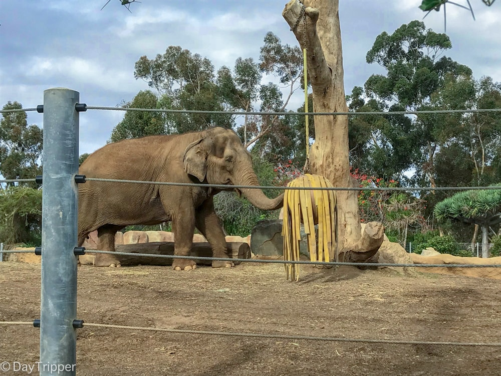 Mary the Elephant from the San Diego Zoo