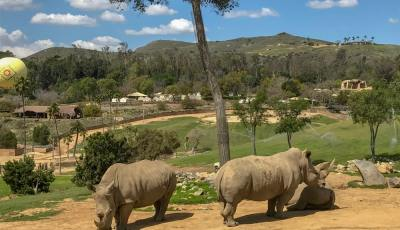 What tours should you take at the Safari Park?